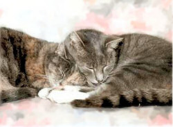 My two diabetic cats, Tokyo (nicknamed Tatty) being squashed by her brother, Paris